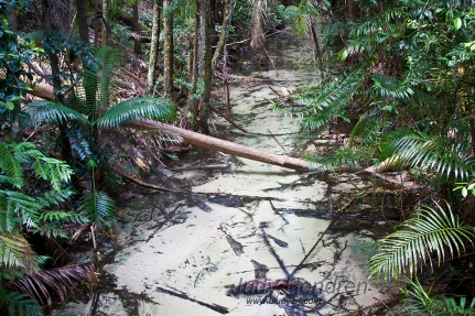 Rainforest, Fraser Island