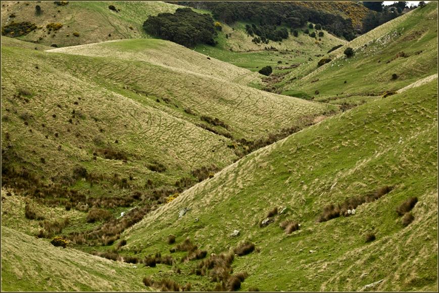 Rolling Hills Otago
