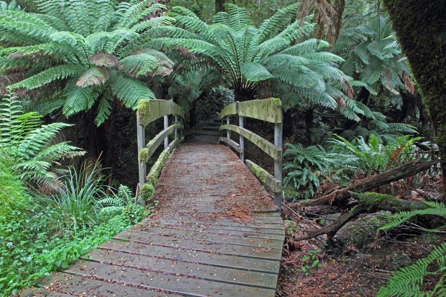Forest Walk.