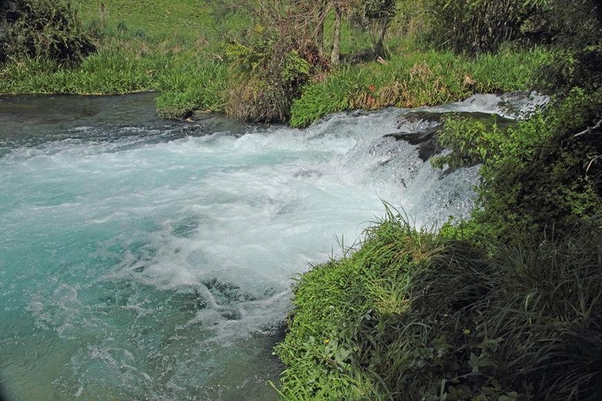 Te Waihou Stream, waterfall, Putaruru.