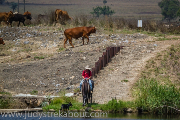 Mustering, watering the horse